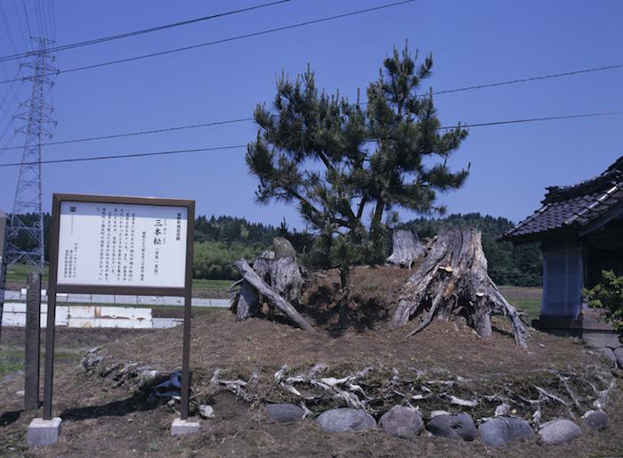 三本松の画像