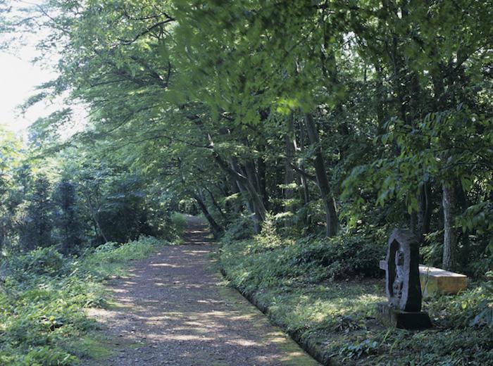 アベマキ林の画像