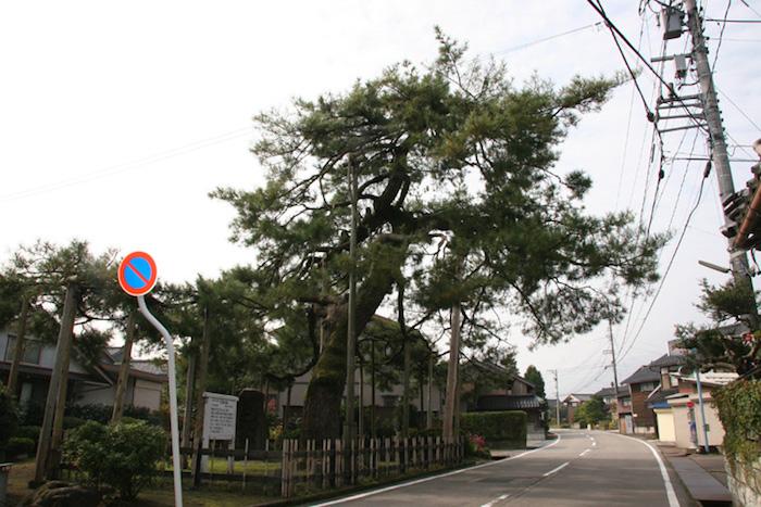 巴塚の松の画像