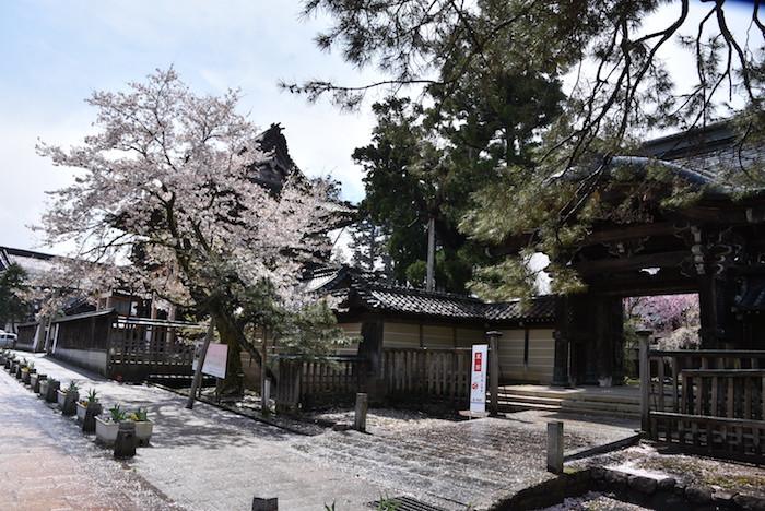 城端しだれ桜まつりの画像