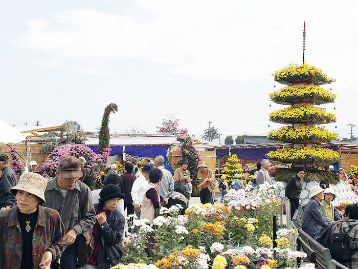 南砺菊まつりの画像